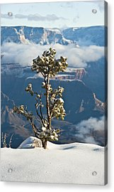 Lonely Tree Over The Grand Canyon Acrylic Print