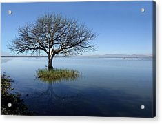 Lonely Tree Acrylic Print by Saul Landell / Mex