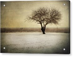 Acrylic Print featuring the photograph Lonely Tree by Yelena Rozov
