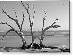 Lonesome Tree Acrylic Print by Melody Jones