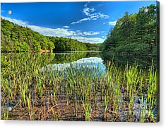 Long Branch Lake Marsh Acrylic Print by Adam Jewell