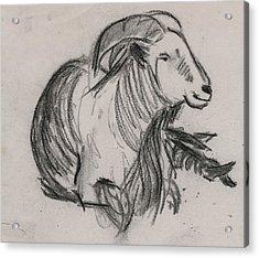 Long Horn Mountain Goat Acrylic Print by Ethel Vrana