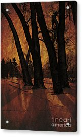 Long Shadows Acrylic Print by Alyce Taylor