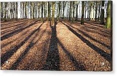 Long Shadows Acrylic Print