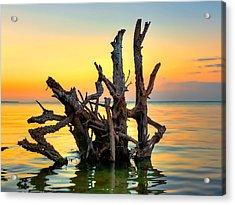 Longboat Key Tree Acrylic Print by Jenny Ellen Photography
