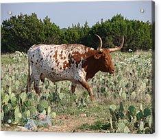 Longhorn In Cactus Acrylic Print