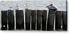 Look This Way Acrylic Print