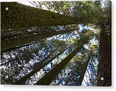 Acrylic Print featuring the digital art Look Up And Dream by Visual Artist Frank Bonilla