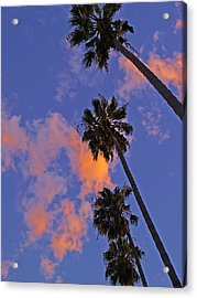 Look Up Acrylic Print by D Wash