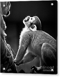 Look Up Acrylic Print by Darcy Michaelchuk