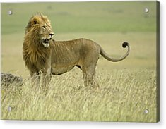 Looking Around Acrylic Print by Michele Burgess