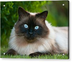 Acrylic Print featuring the photograph Looking At You by Andrew  Michael