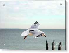 Acrylic Print featuring the photograph Looking For Dinner by Clayton Bruster
