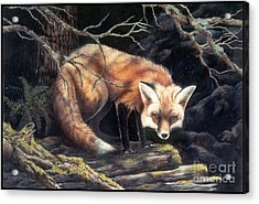Looking For Lunch   Sold Acrylic Print