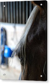 Acrylic Print featuring the photograph Looking Forward by Jennifer Ancker