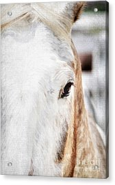 Looking Into Her Soul Acrylic Print by Darren Fisher