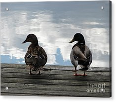 Looking Left Acrylic Print by Artie Wallace