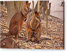 Looking Out From The Safety Of The Pouch Acrylic Print by Bob and Nancy Kendrick