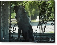 Looking Out The Window Acrylic Print