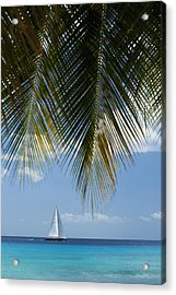 Looking Through Palm Trees To Large Acrylic Print by Axiom Photographic