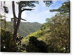 Looking Through The Trees In A Tropical Acrylic Print by Taylor S. Kennedy