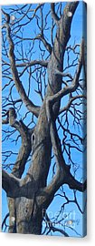Looking Up   Sold Acrylic Print