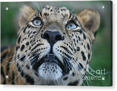 Looking Up Acrylic Print by Carol Wright