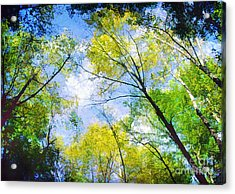 Looking Up Acrylic Print by Darren Fisher