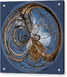 Looking Up Orb Acrylic Print by Sandi Blood