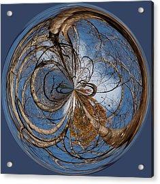 Looking Up Orb Acrylic Print