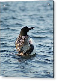 Loon Dance 1 Acrylic Print by Steven Clipperton