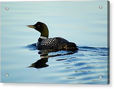 Acrylic Print featuring the photograph Loon by Steven Clipperton