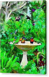 Lorikeets And Rosellas Acrylic Print