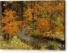 Lost Creek At Beavers Bend Acrylic Print