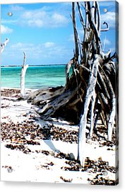 Acrylic Print featuring the photograph Cozumel Mexico  Paradise On Earth by Danielle  Parent