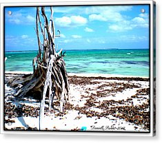 Acrylic Print featuring the photograph Lost Paradise The Sequel 3 by Danielle  Parent