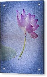 Lotus Dream Acrylic Print by Jill Balsam