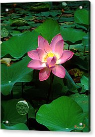 Lotus Flower And Capsule 24a Acrylic Print by Gerry Gantt