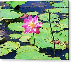 Lotus Flower Acrylic Print by Jarrod Faranda