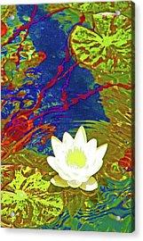 Lotus Acrylic Print by James Mancini Heath