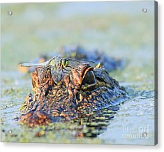 Acrylic Print featuring the photograph Louisiana Alligator With Dragon Fly by Luana K Perez