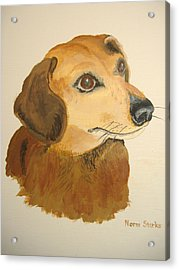 Acrylic Print featuring the painting Lovable Dachshund by Norm Starks