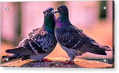 Love At First Site Acrylic Print by Shannon Harrington