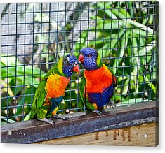 Love Birds Acrylic Print by Julio n Brenda JnB