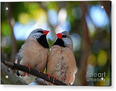 Acrylic Print featuring the photograph Love Birds by Linda Mesibov