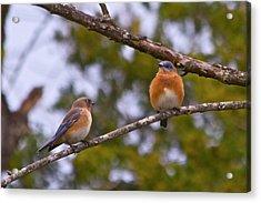 Love Birds Acrylic Print