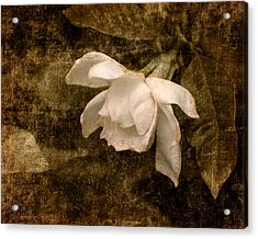 Love Letter Ix Cape Jasmine Gardenia Acrylic Print by Jai Johnson