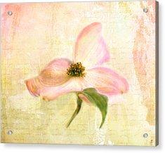 Love Letter Vi Acrylic Print by Jai Johnson