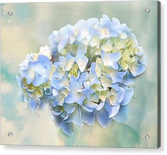 Love Letter Vii Hydrangea Acrylic Print by Jai Johnson