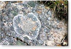 Love Lichen Acrylic Print